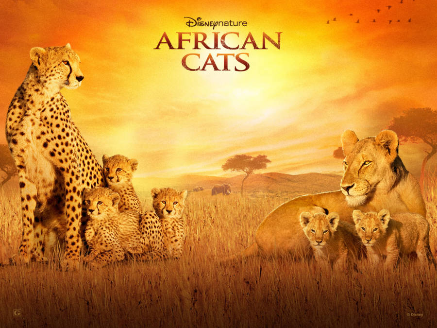 african-cats 5
