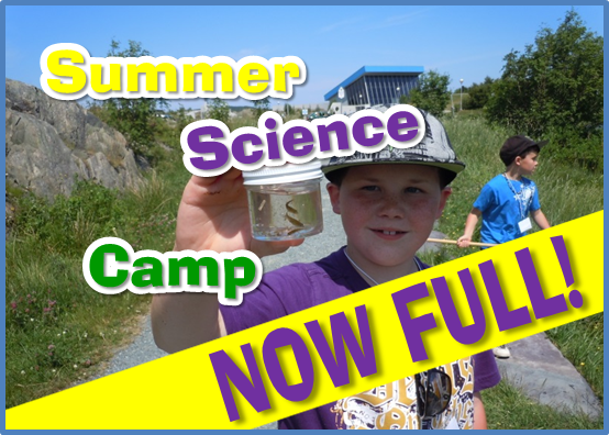 Feature: Summer Camp