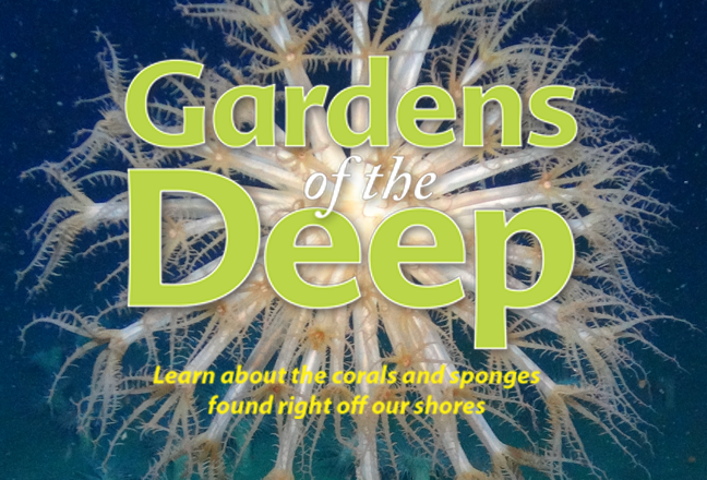 Feature: Gardens of the Deep